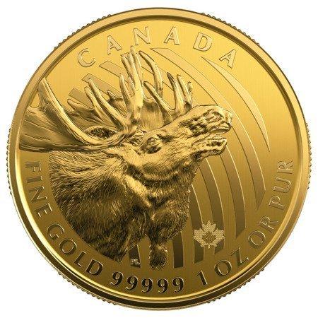 Zew Natury Łoś Złota Moneta 1 uncja